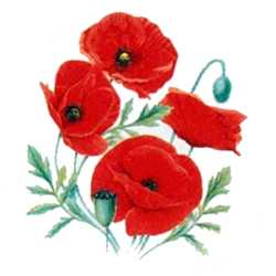 Red Poppy, flower for Aries